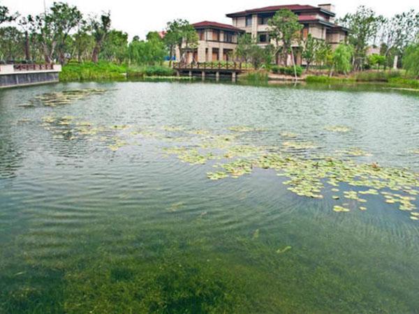 上海景观花园水系万博手机版3.0下载修复构建